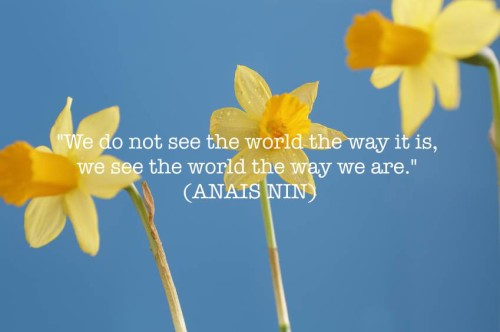 Anais Nin quote against daffodils