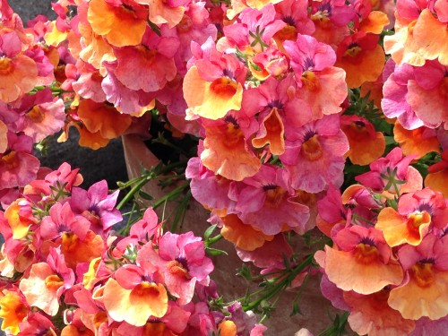Pink and orange summer flowers